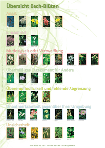 Bach-Blüten-Übersicht - Poster